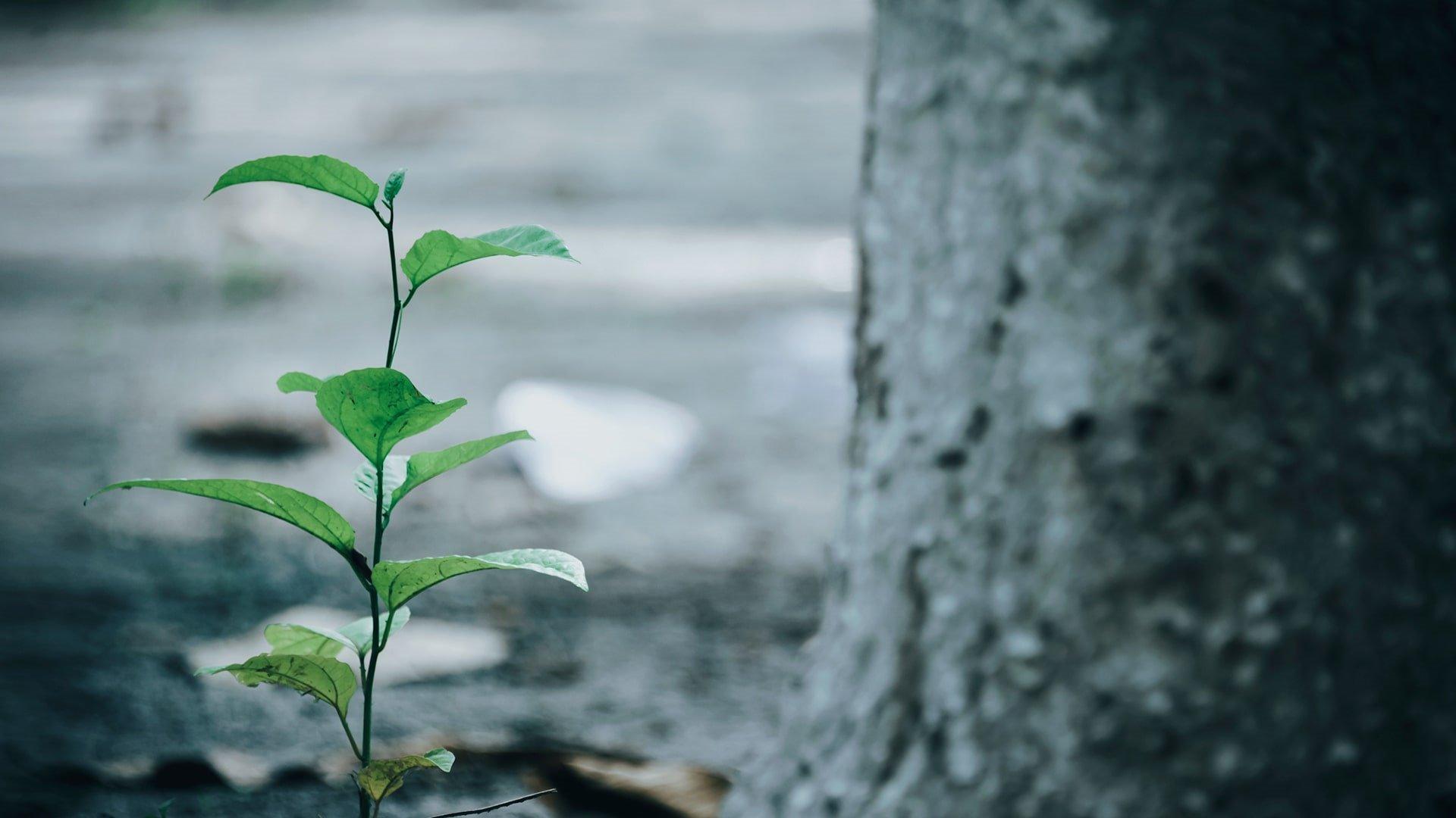Tree Planted 1920 X 1080